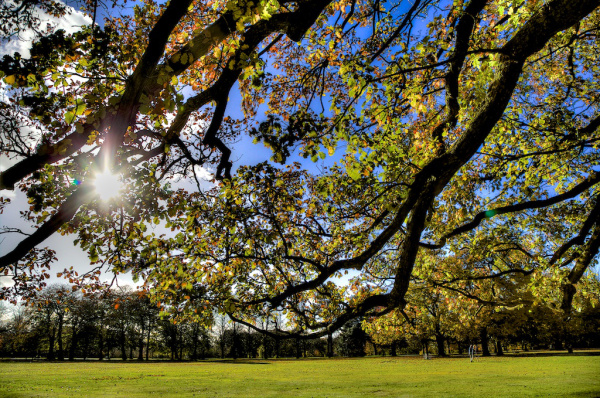 trees-in-calderstones-park-c-dave-jones